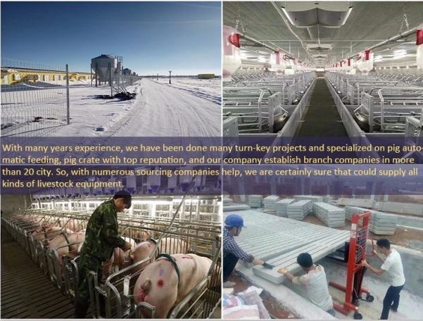 livestock pig farm equipment