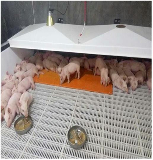 pig farm ventilation system