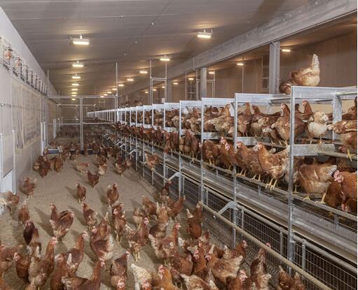 poultry ventilation system