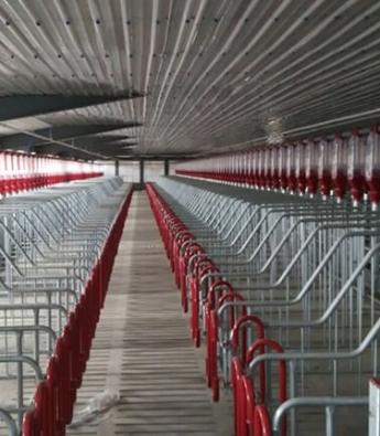 Pig Farming Equipment Companies in Paraguay