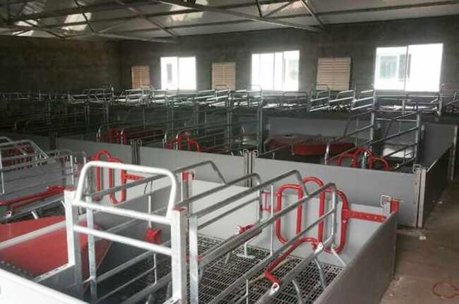 pig stalls price china