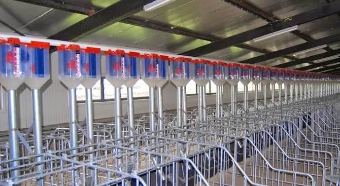 double chain feeding system