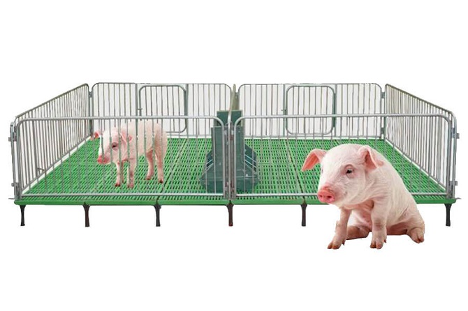pig feeding system