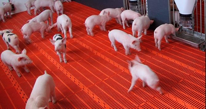 pig floor flat