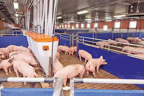 pig systems for experts