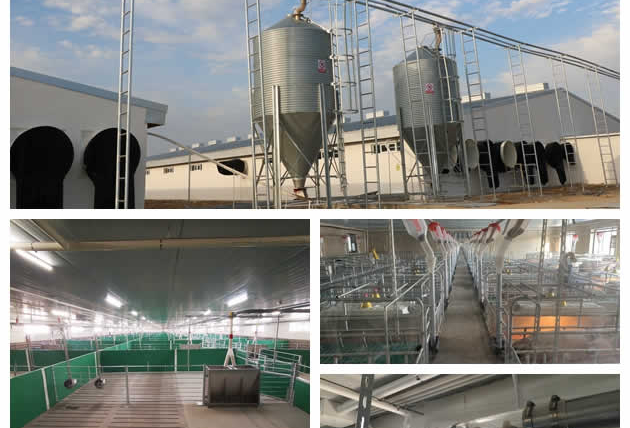 solution for pig farm