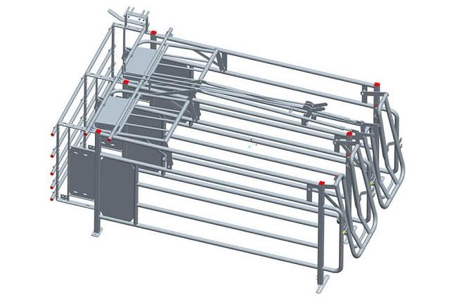 Pig Gestation Crates