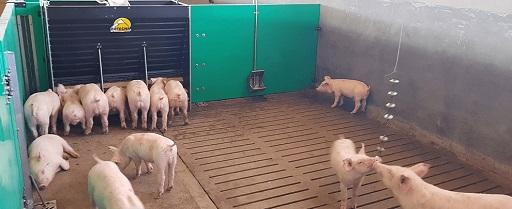 piglets crates