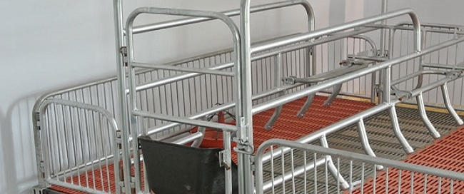 pig stall